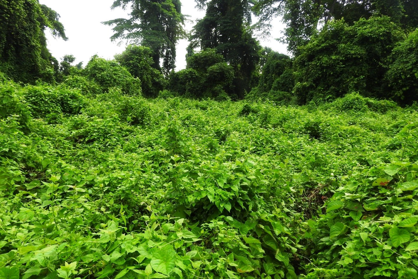 Walking through Jalthal forest: Exploring diversity, importance and degradation